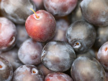 Free Plums Stock Images - 7229744