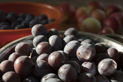 Plums and apples Stock Images