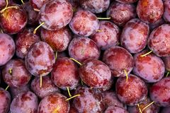 Plums Background. Stack of plums photographed from the top view. Water drops on the surface of the fruits Royalty Free Stock Photo