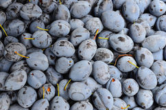 Plums. Background - full frame of plums, ready for sale Royalty Free Stock Photography