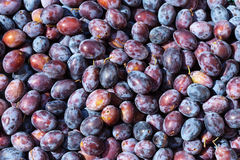 Plums background Royalty Free Stock Photos