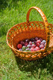 Plums in basket Stock Photos