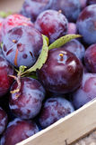 Plums in a basket Royalty Free Stock Images