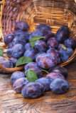 Plums in the basket Royalty Free Stock Photos