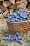 Plums in a basket Stock Images