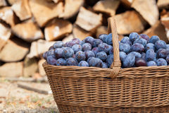 Plums in a basket Stock Photography