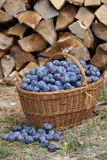 Plums in a basket Royalty Free Stock Photos