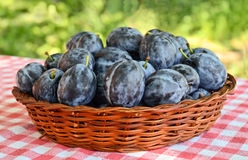 Plums. Basket full of plums on the table royalty free stock photography
