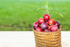 Plums in the basket Stock Images