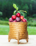Plums in the basket Stock Image