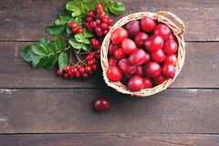 Plums in a basket and rowanberry Stock Photo
