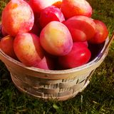Plums in basket Royalty Free Stock Photos