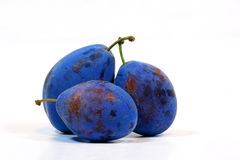 Plums blue Stock Images