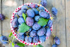 Plums. Blue and violet plums in the garden on wooden table Stock Photography