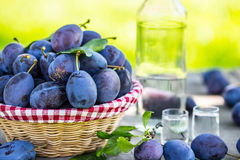 Plums. Blue and violet plums in the garden on wooden table Stock Image