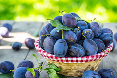 Plums. Blue and violet plums in the garden on wooden table Stock Images