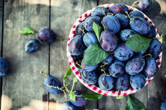 Plums. Blue and violet plums in the garden on wooden table Royalty Free Stock Photography