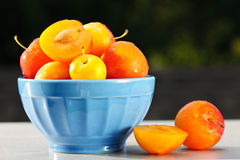 Plums in bowl. Fresh yellow plums in a bowl outside Royalty Free Stock Photos