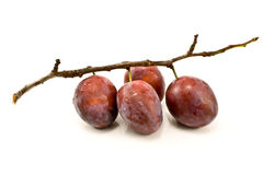 Plums on branch Royalty Free Stock Photography