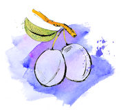 Plums branch watercolor illustration Stock Photography