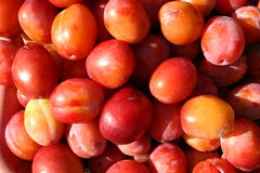 Plums close up. Ripe red plums in close up Stock Images