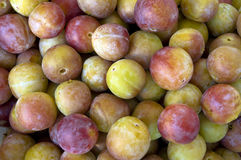 Plums are a close-up. Stock Image