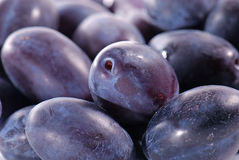 Plums in close-up Stock Photo