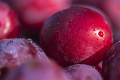 Plums, close up view... Stock Photos