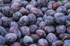 Plums detail. A large number of excellent ripe plum Stock Image