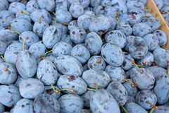 Plums. At a farmer's market Royalty Free Stock Image