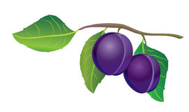 Plums Royalty Free Stock Photography