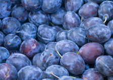 Plums. Fresh purple plums for food background Stock Photo