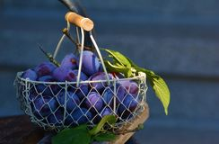 Plums, Fruit, Fruit Basket, Blue Royalty Free Stock Photography
