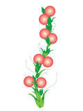 Plums fruits. Rose colour plums fruits  and leaves in branch of tree by illustration Stock Images