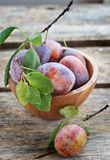 Plums  fruits Stock Photography