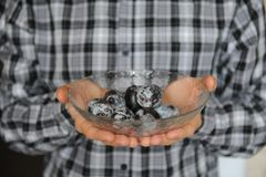 Plums in glass bowl in the hands on backgound of plaid shirt closeup. Plums in glass bowl in hands on backgound of plaid shirt closeup Royalty Free Stock Images