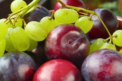 Plums and grapes, Stock Photos