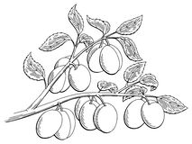 Plums graphic tree black white isolated sketch illustration. Vector Royalty Free Stock Image