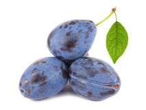 Plums with green leaf Stock Photos