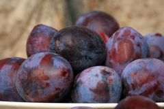 Plums from home orchard on wooden table stock image