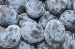 Plums. Image of fresh picked plums Stock Photos