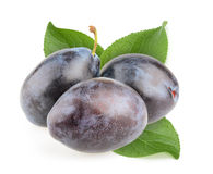 Plums isolated Royalty Free Stock Photos