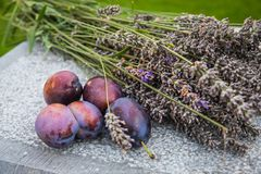 Plums with lavender flowers. Fresh picked plums with lavender flowers on the stone table outdoors royalty free stock photography
