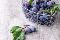 Plums with leaves Stock Photo
