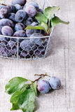 Plums with leaves Stock Photography