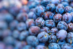 Plums on the market stand in Poland. Stock Images