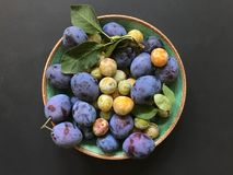 plums and mirabelles on a turquoise ceramic plate on the black background. stock images