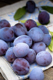 Plums on napkin Stock Image