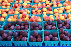 Plums and Nectarines Stock Images