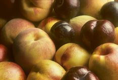 Plums, nectarines and peaches piled together Royalty Free Stock Photo